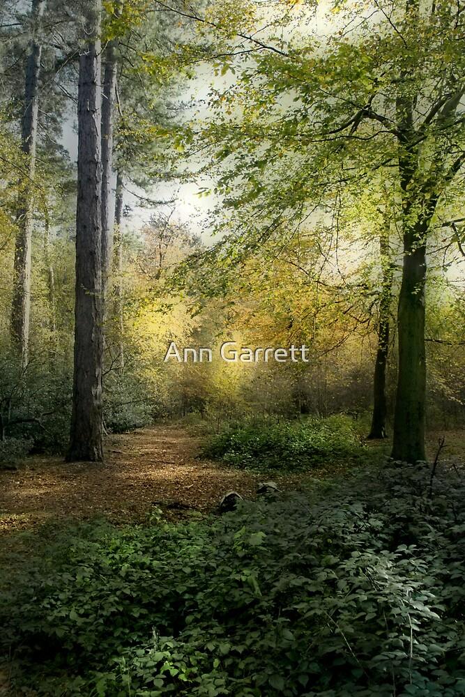 Forest Light by Ann Garrett
