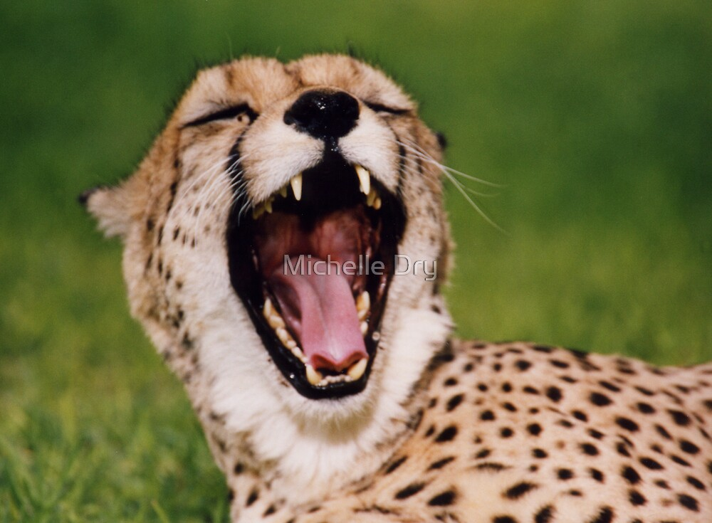 Yawn by Michelle Dry