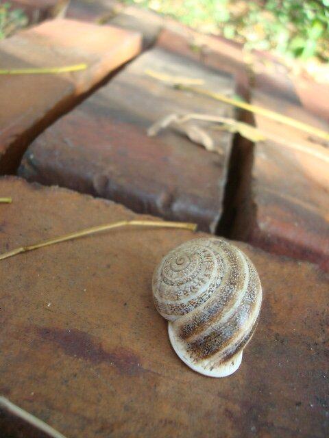 lazy snail by veronica123