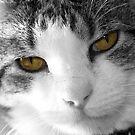 Cat by Nicmutt