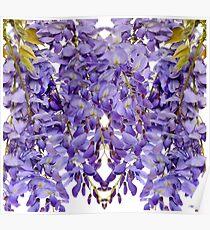 Wisteria flowers floral design element. Poster