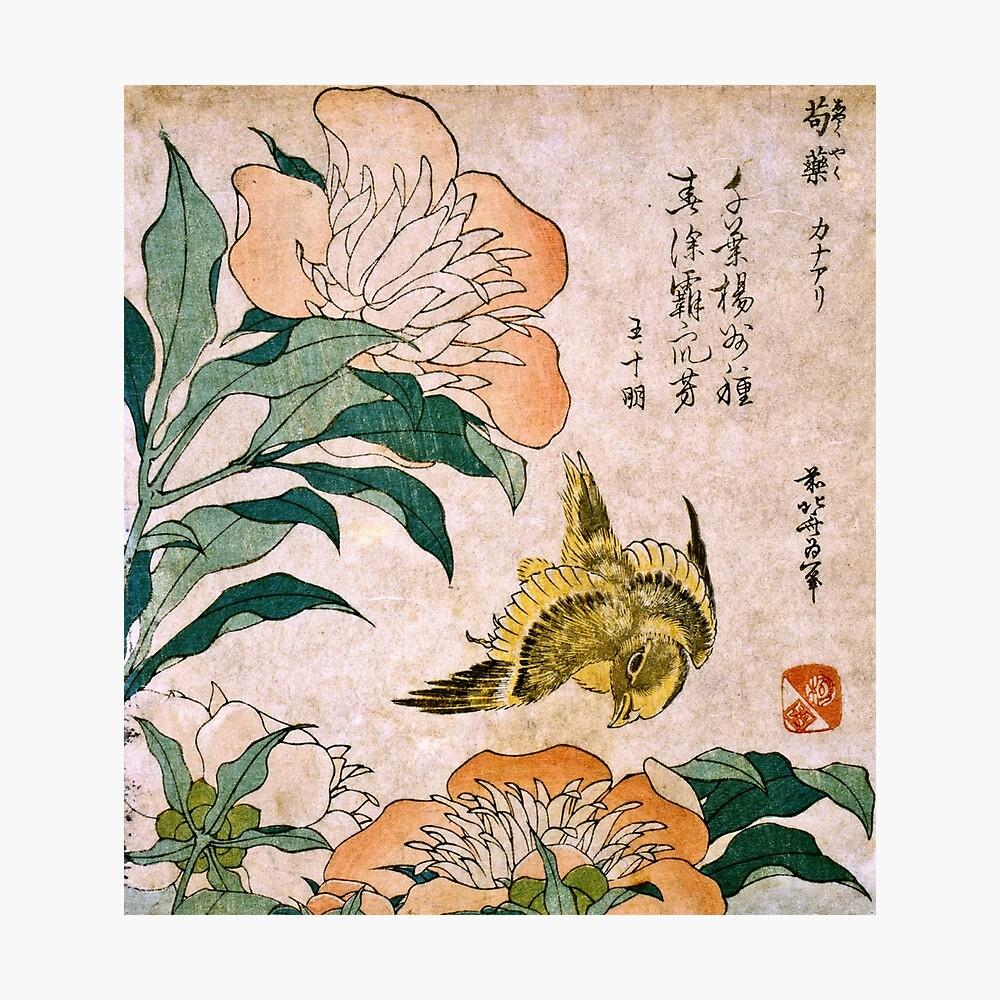 Hokusai Katsushika - Peonía y Canarias Lámina fotográfica