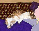 Sleeping Indigo Kitty  by melasdesign