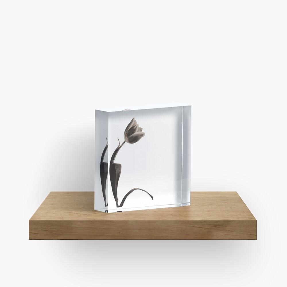 Antique Tulip Acrylic Block