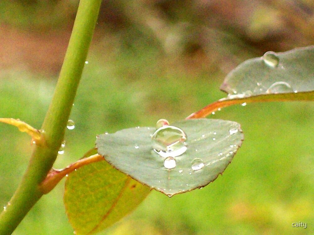 rain drops  by caity