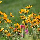 my spring garden by ANNABEL   S. ALENTON