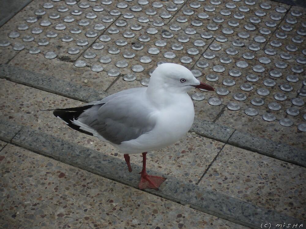 Long John Seagull by DreamingIce