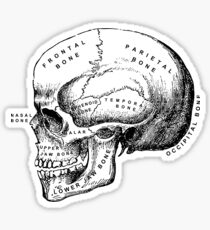 Pegatina Ilustración de cráneo médica anatómica vintage