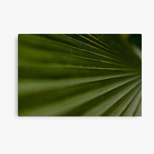 Leaf Steps Canvas Print