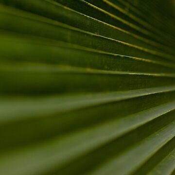Leaf Steps by dopeytree