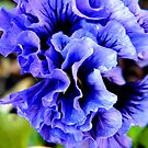 Frilly Pansy by ElsT