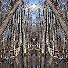 Trippy scene in the woods by jodi payne