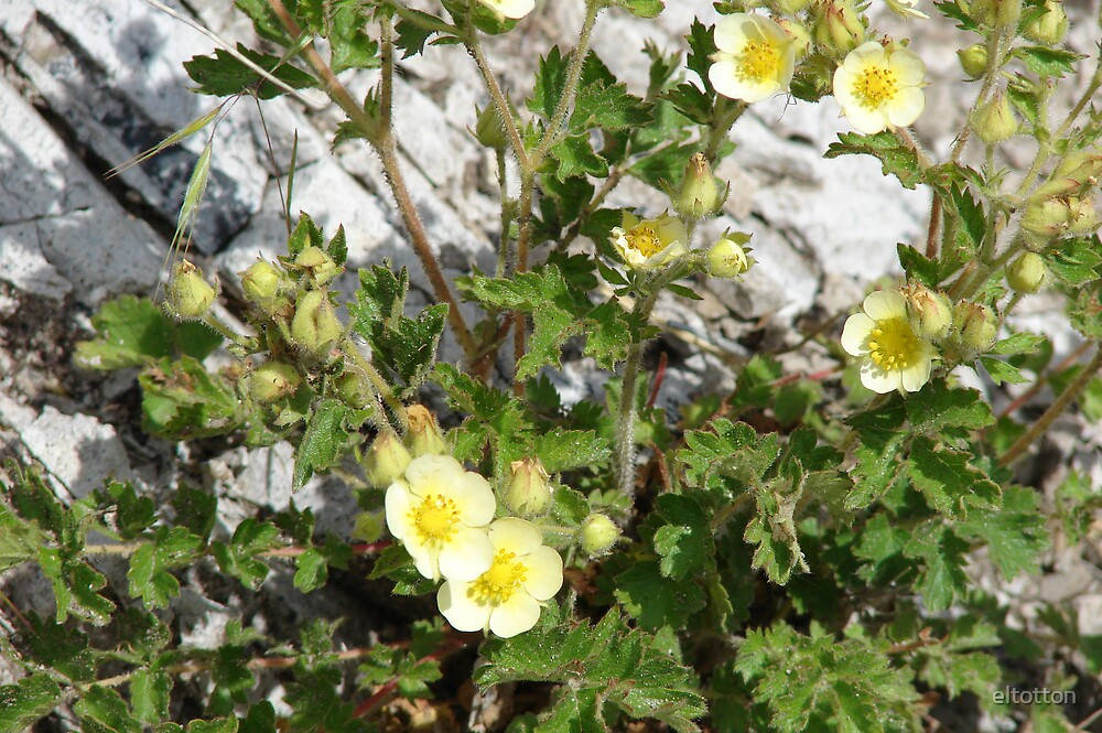 Prairie Flowers on Bear Butte by eltotton