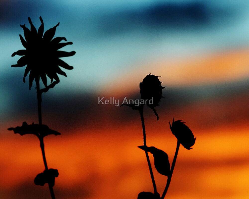 wild by Kelly Angard