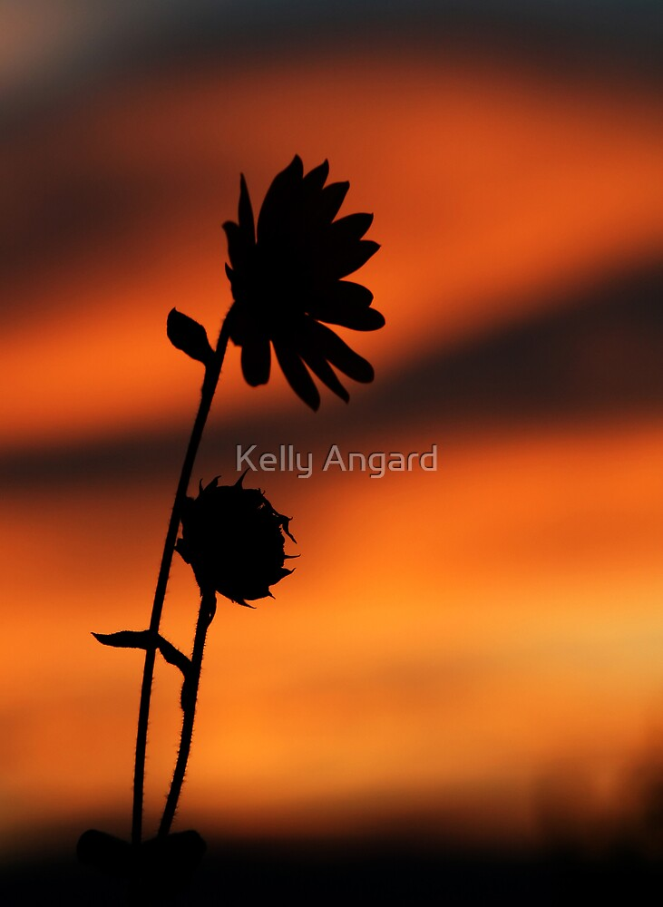 solitary by Kelly Angard
