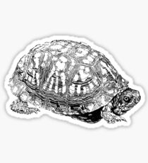 box turtle drawing Sticker