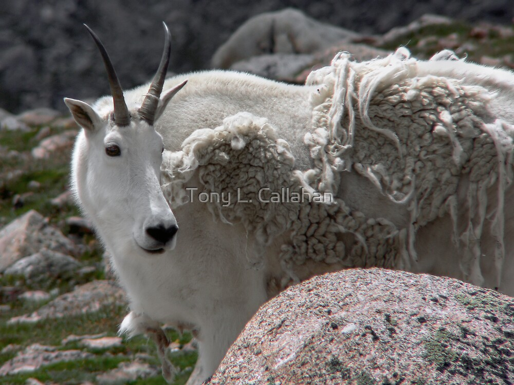 Be Sure To Get My Good Side by Tony L. Callahan