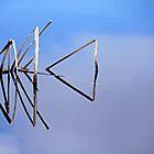 Cattail In Reflection by Debbie Oppermann