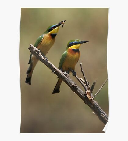 Little Bee Eaters Poster