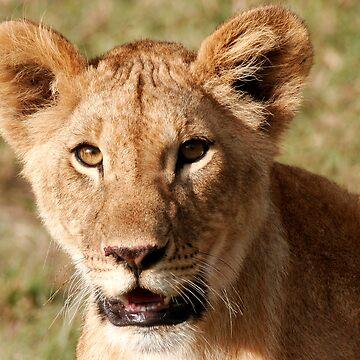 Lion Cub by SteveBulford