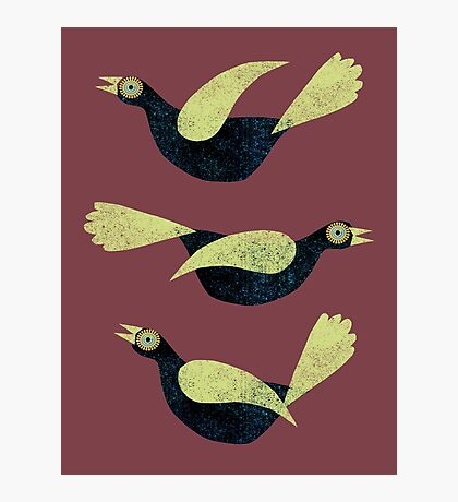 Three Blackbirds with green wings Photographic Print