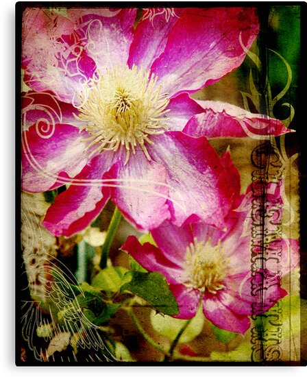 the clever clematis by Kelly Angard