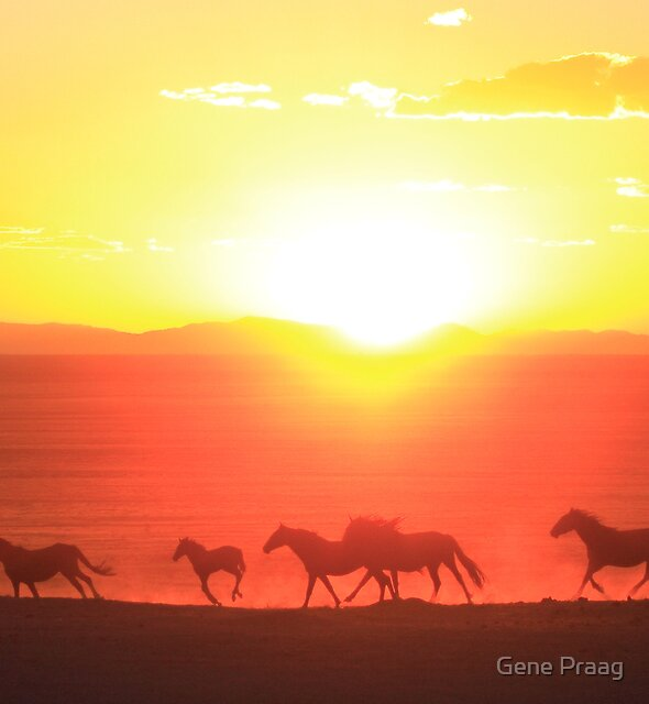 Sunset Run by Gene Praag