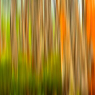 THE FOREST by ColinSmith