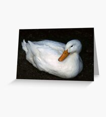 White Duck at rest Greeting Card