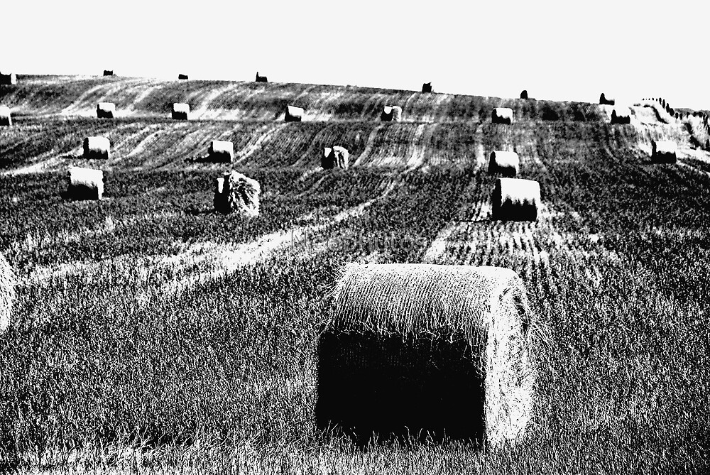 Harvest Trilogy-B/W by Neophytos