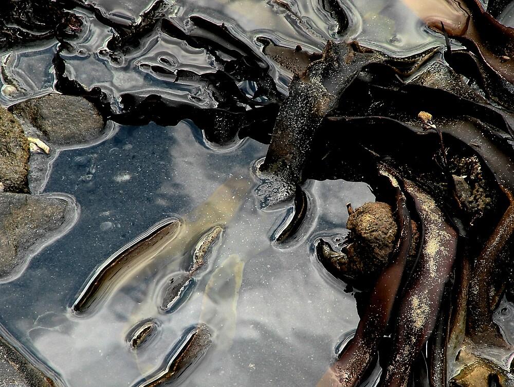 Rock Pool Reflections by Owen Kaluza