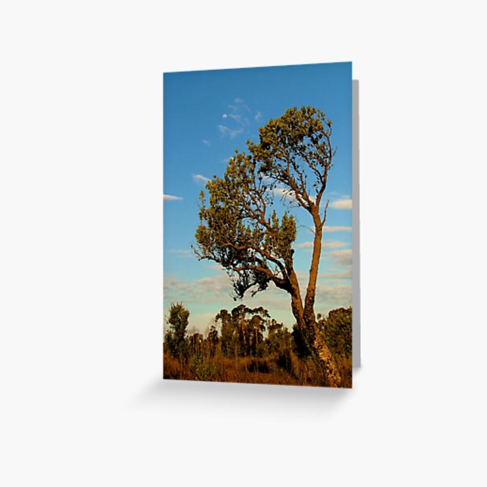 Lone Banksia Greeting Card