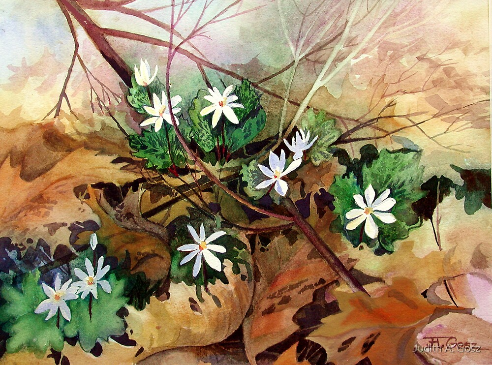 Bloodroot by Judith A. Gosz