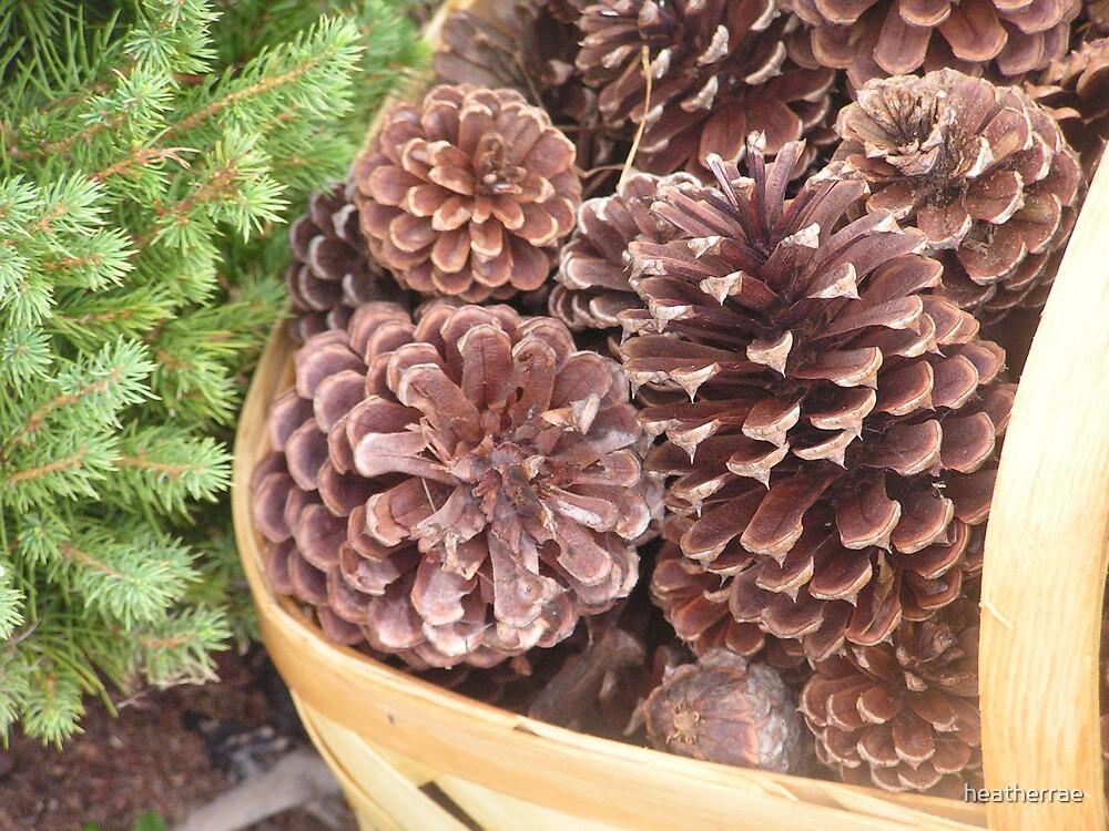 Pine Cone by heatherrae