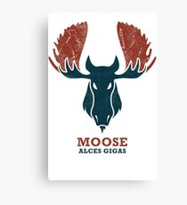 Alaskan Moose - Alces Gigas Canvas Print