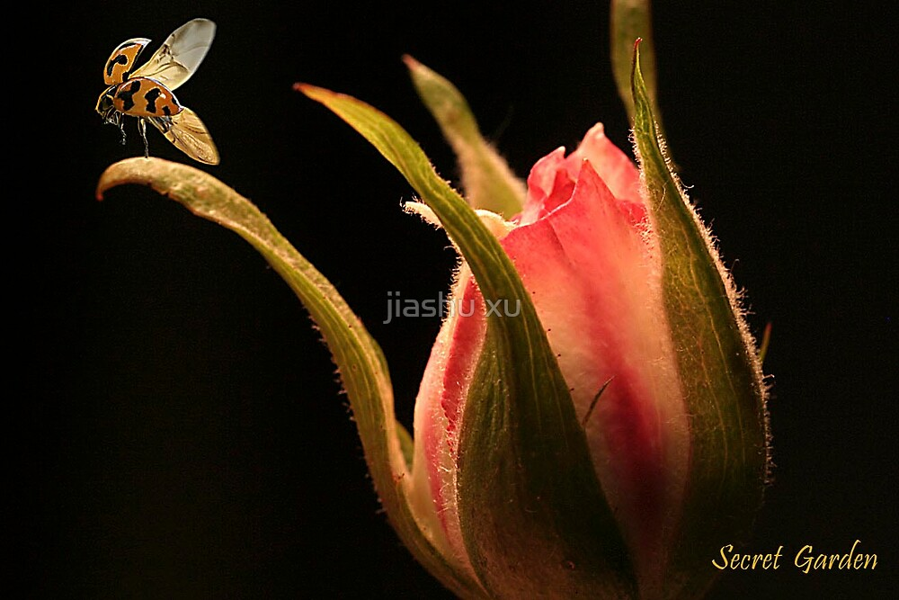 pink rose and ladybird by jiashu xu