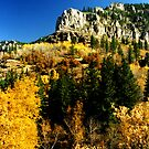 Spearfish Canyon by Tim Denny