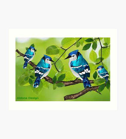 Blue jays (3755 views) Art Print