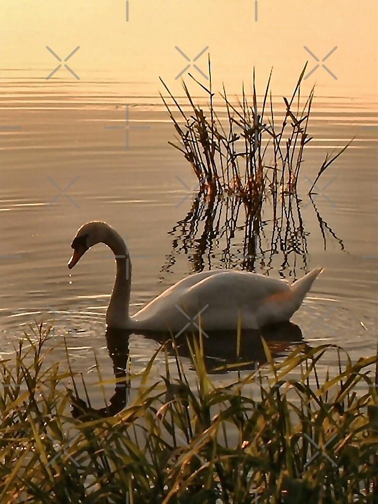 sunset swan by Yampimon