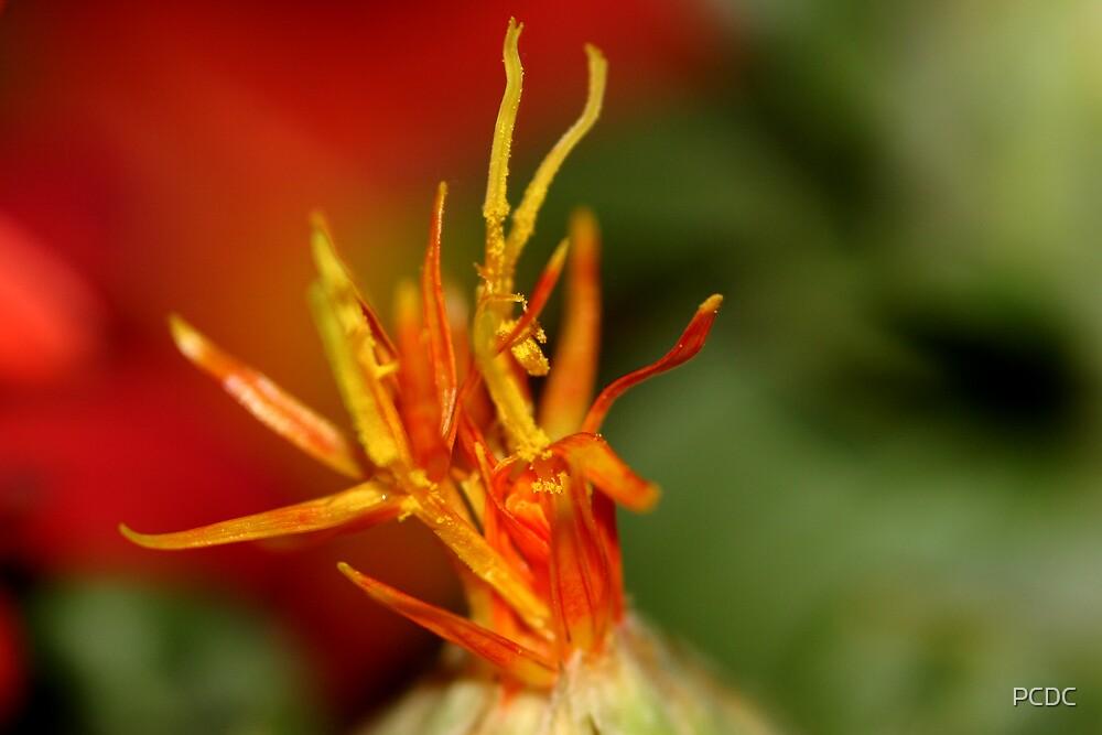 Macro Flower by PCDC