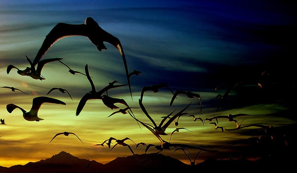 migration by gingarasu