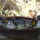 Rub a Dub, Dub Four Birds in a Tub by Coralie Plozza