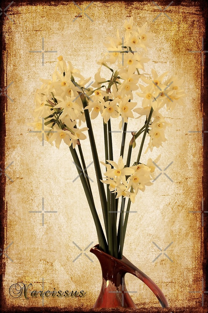Narcissus by Elaine Teague
