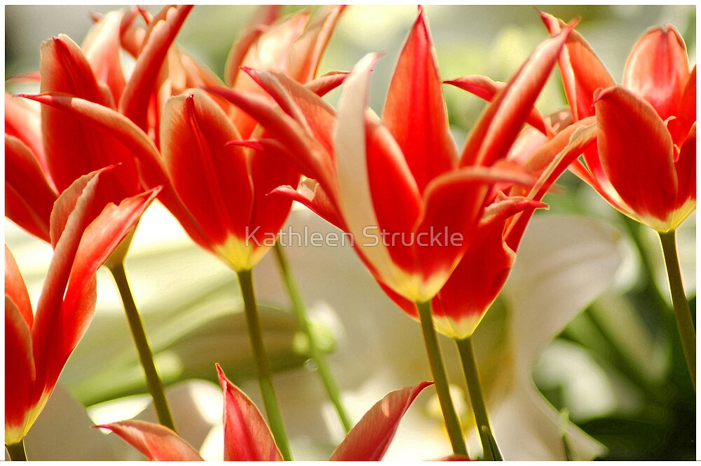 Dance Of The Tulips by Kathleen Struckle