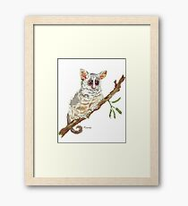 Pippin, the Bush baby Framed Print