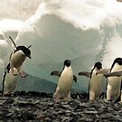 Sometimes a Penguin can't help but show off! by Michelle Dry