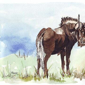 Black Wildebeest (Connochaetes gnou) by MareeClarkson
