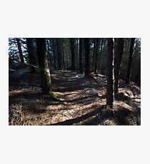 inverewe pine trail Photographic Print