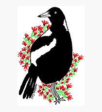 The most handsome Magpie with NSW Christmas Bush Photographic Print