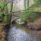 Bridge over Ventiford Brook by lezvee